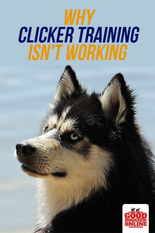 4 Reasons Why Dog Clicker Training Isn T Working For You Good