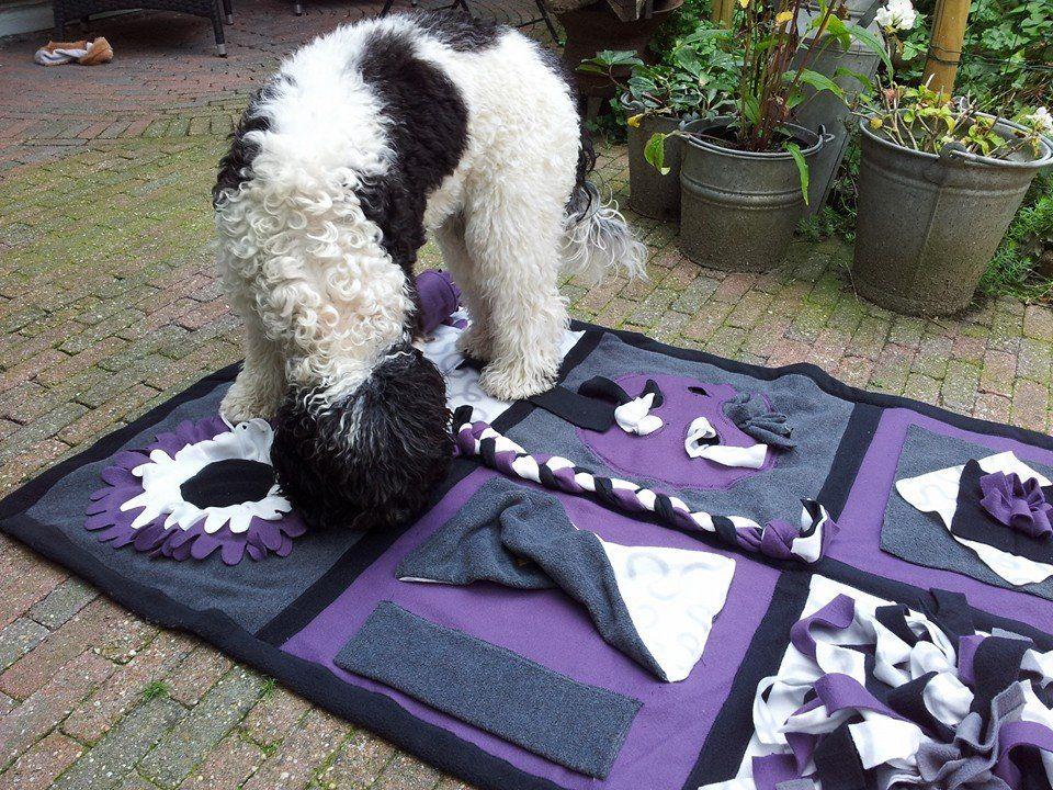 Dog Enrichment Idea Dog Enrichment Diy Dog Toys