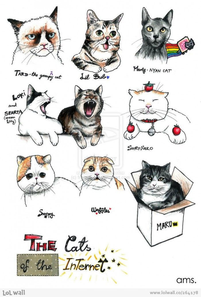 Internet cats from www.lolwall.co