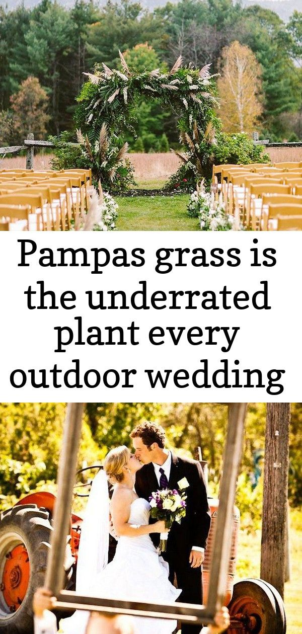 Pampas Grass Is The Underrated Plant Every Outdoor Wedding Needs 14 Outdoor Wedding Pampas Grass Pampas
