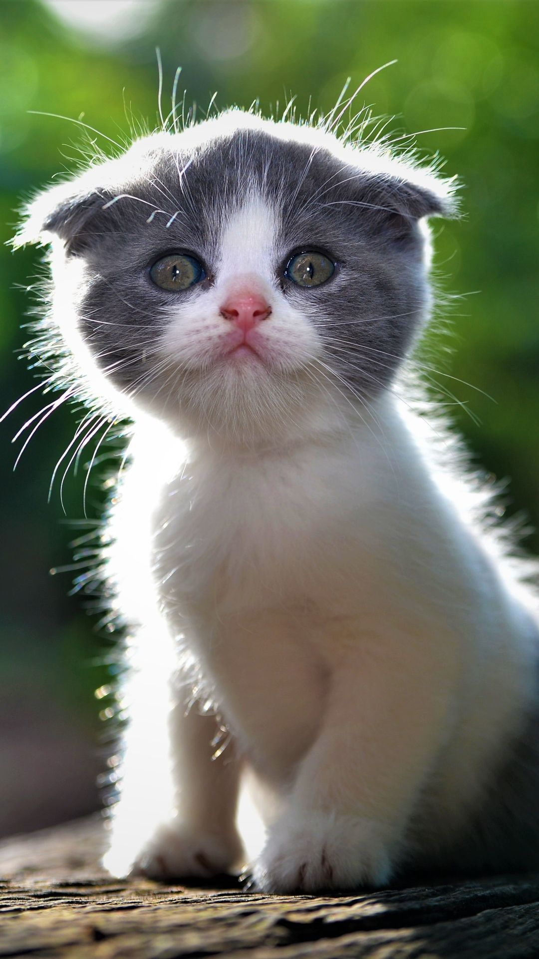 Pin By Rayleen Tritt On Adoro Este Cute Animals Cats And Kittens Animals