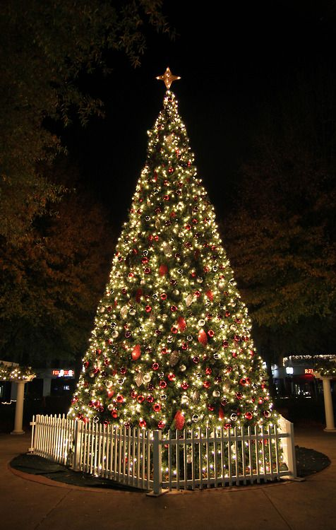 Birkdale Christmas Tree By Dillon Makar Decorating With Christmas Lights Merry Christmas Happy Holidays Christmas In America
