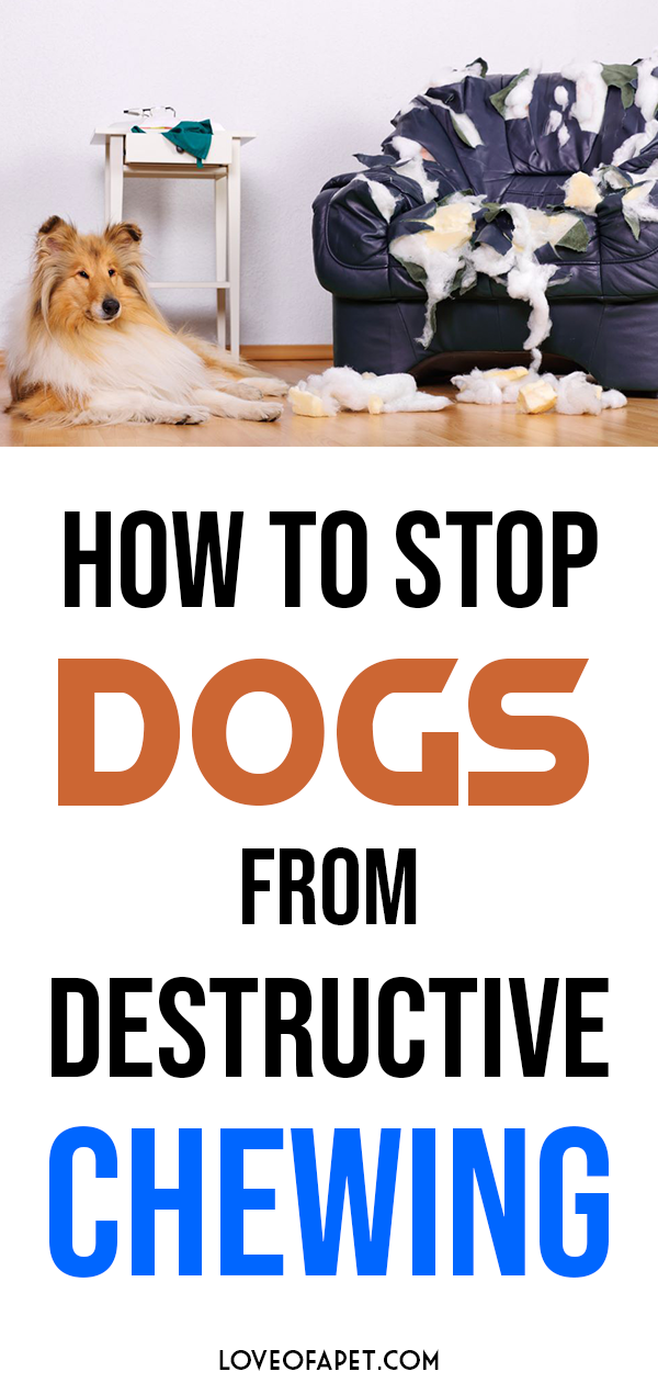 How To Stop Dogs From Destructive Chewing 11 Tips Love Of A Pet Training Your Dog Easiest Dogs To Train Dog Training Tips