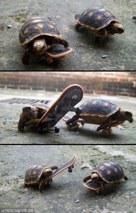 Turtles on skateboards slight meme obsession and - Tortue ninja skateboard ...