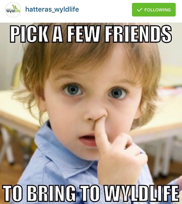 Pin By Robb Schreiber On A Young Life Wyldlife Meme Pics Yl Club Ideas Instagram Posts Young Life Meme Pictures Funny Bunnies