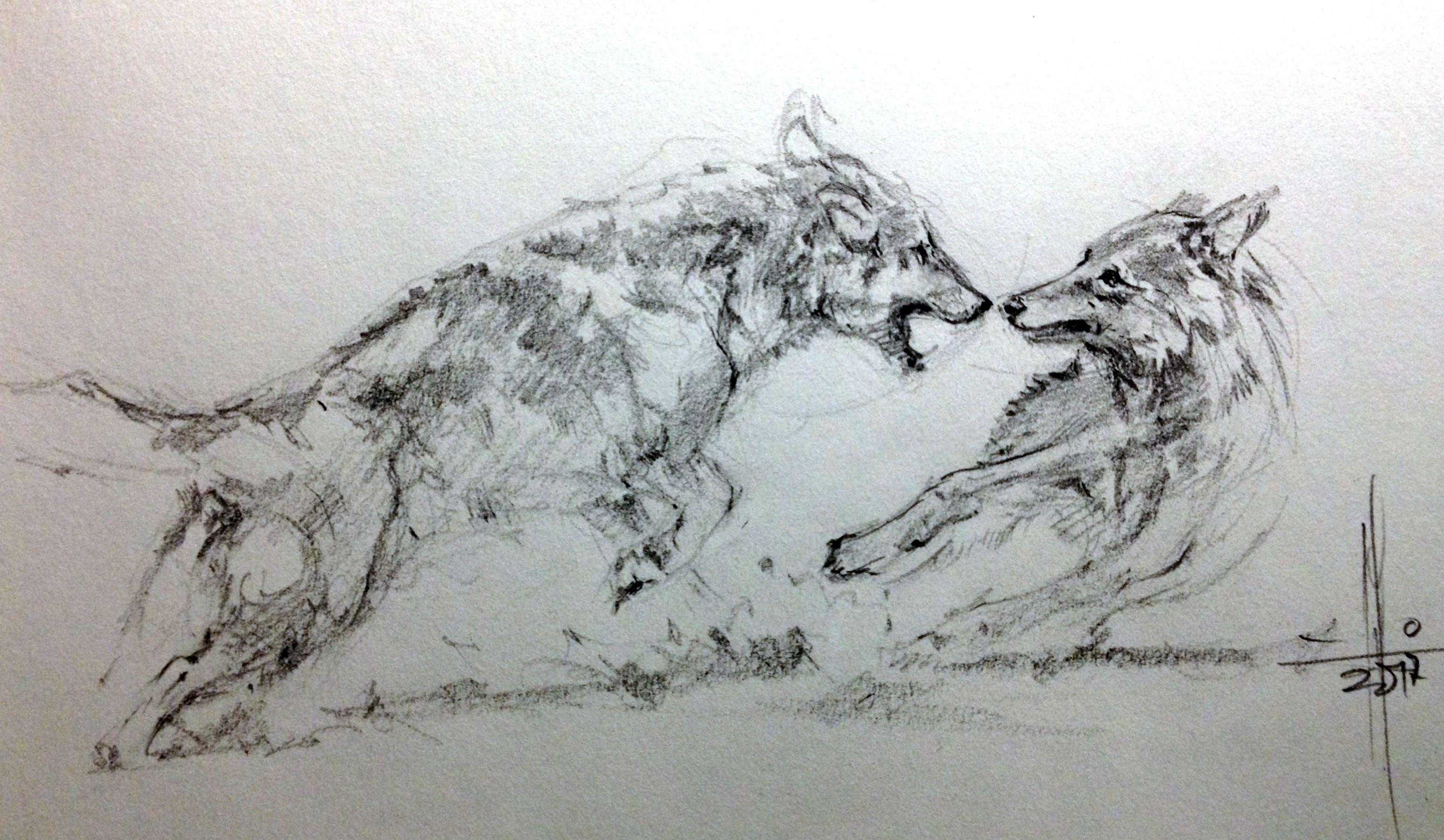 Dibujo a lápiz de lobos peleando por Francisco Javier Abellán ...