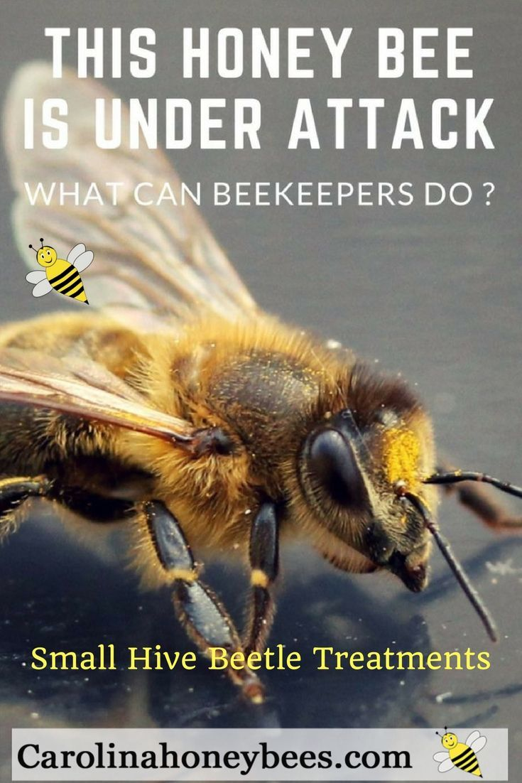 Raising Bees In Backyard | Homideal