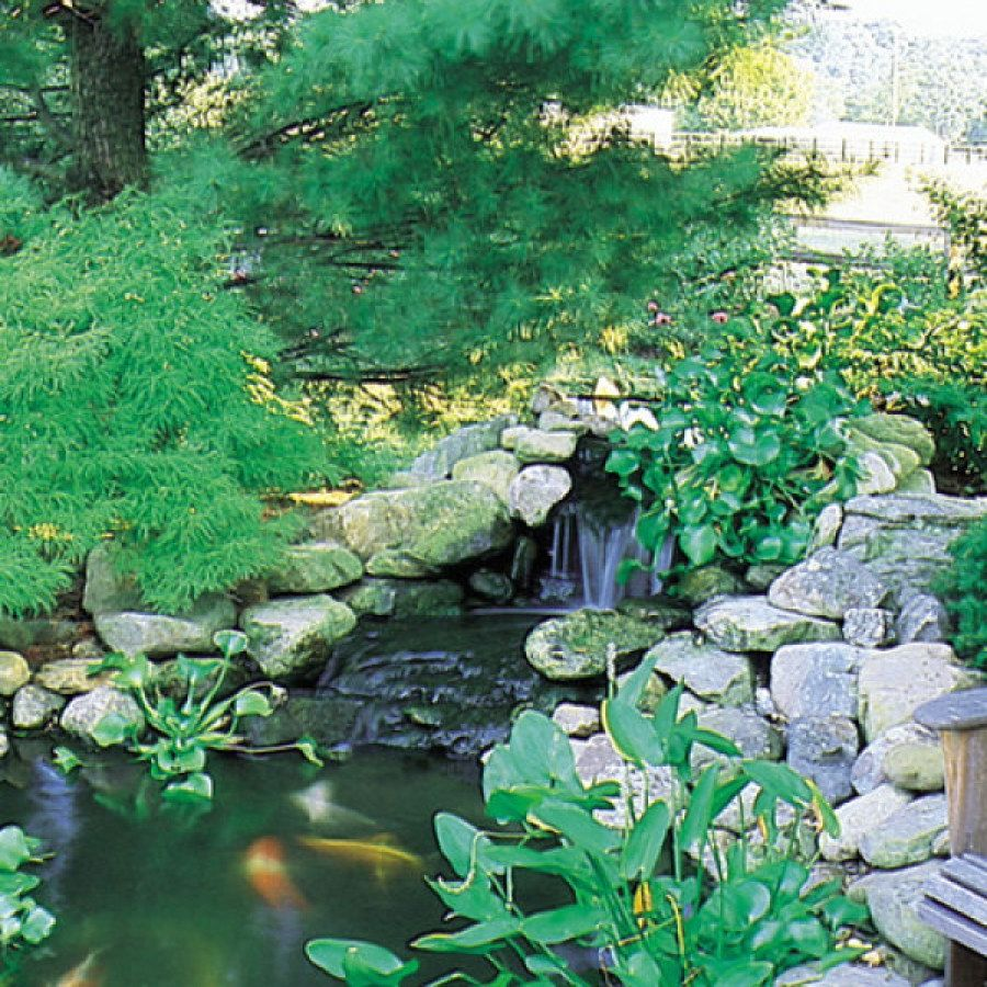 Creative Koi Pond Projects You Can Create To Accent Your ...