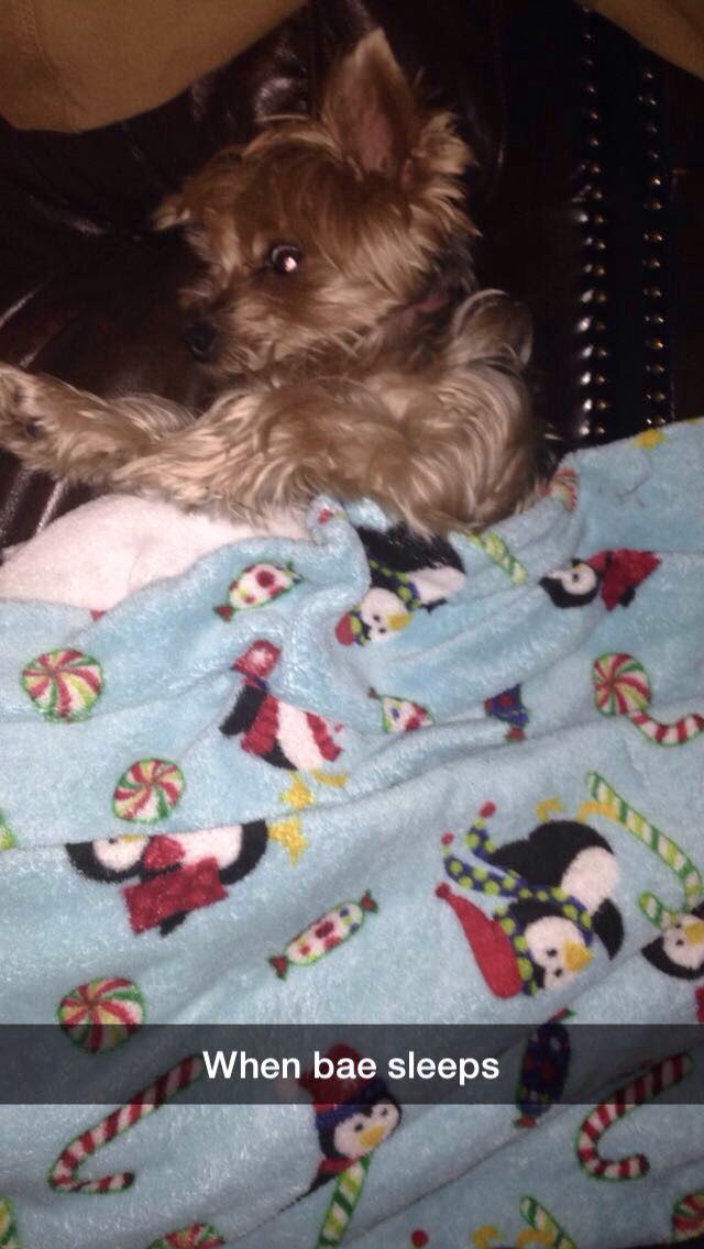 So my dog fell asleep and I put a blanket over her