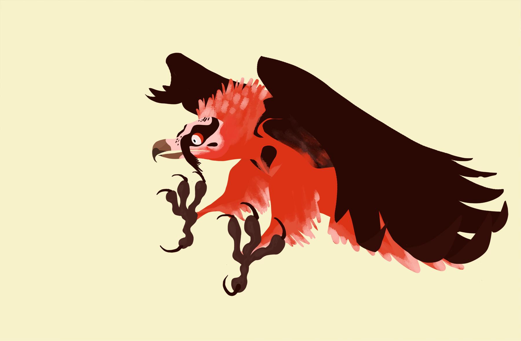 gamma-bearded-vulture-439500.png (1800×1179) | Estalia ...