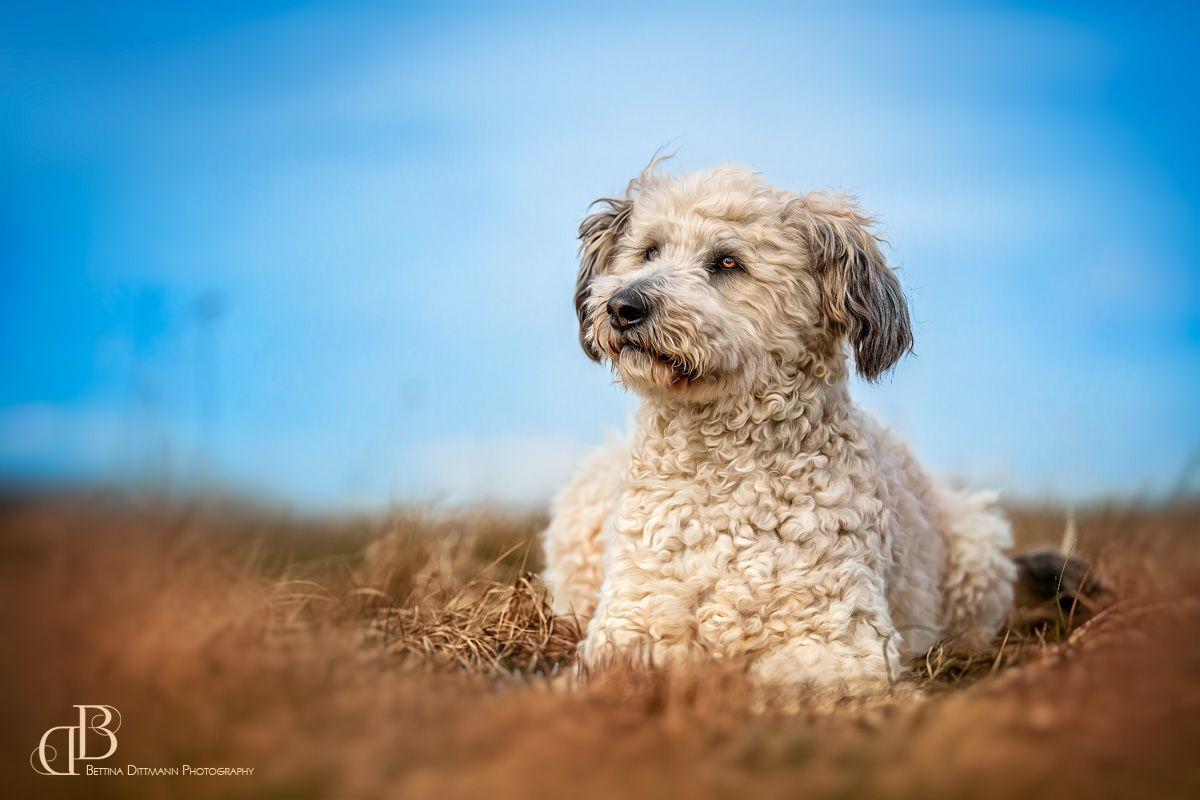 Tierisches Con Imagenes Pixeles Lindo