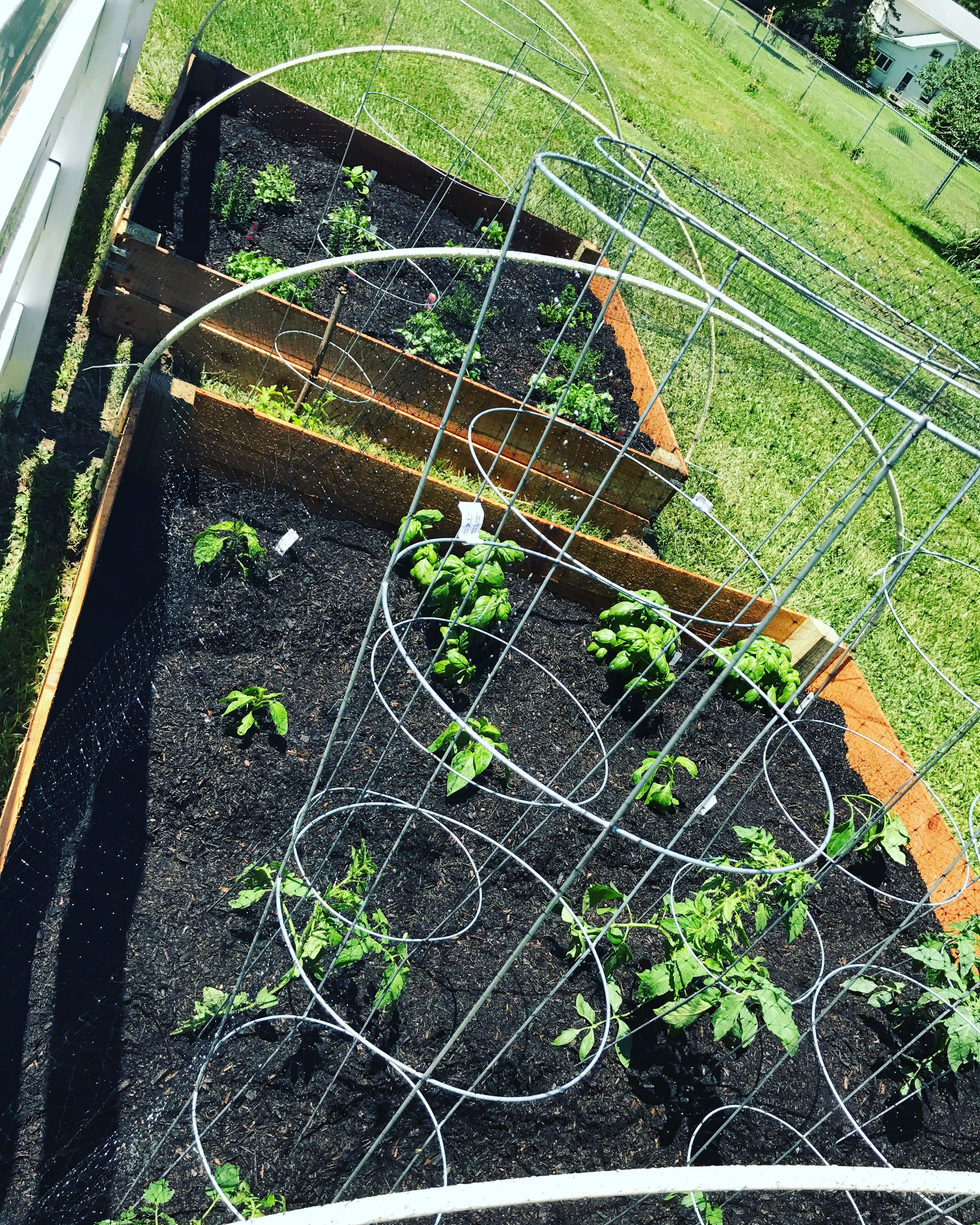 Raised Garden Bed Made With Cedar Fence Posts And 4x4's
