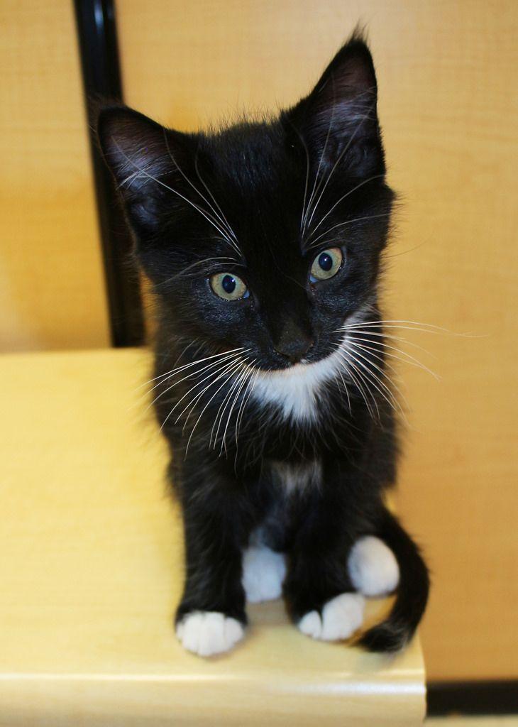 Cunningham Scat Petsmart Adoption Centre Cat Website Cat Care Cat Behavior