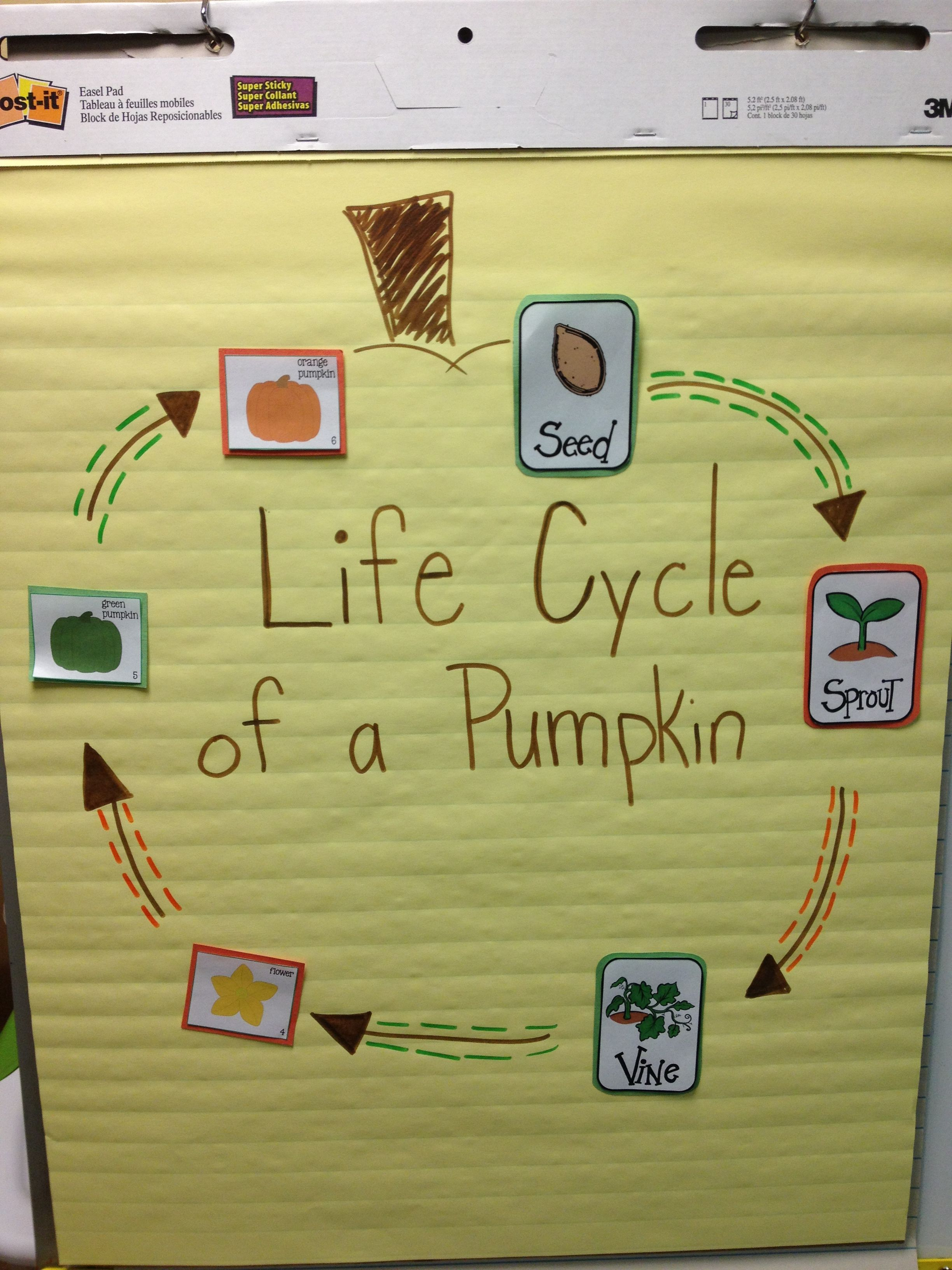 hight resolution of anchor chart life cycle of a pumpkin