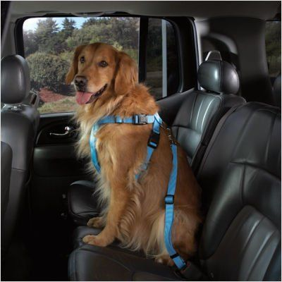 $19.95-$13.99 Cruising Companion Bright Light Bluebird Blue Car Travel Safety Harness Dog Seatbelt Seat Belt Large - The Ultimate In Pet Travel Safety! Help protect pets while traveling in cars with these Safety Harnesses. The adjustable web harness attaches easily to virtually any seat belt with a universal seat belt clip. An adjustable strap keeps dogs safely contained while allowing them to si ...