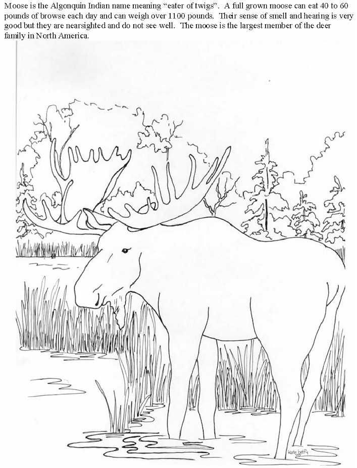 Moose2 Jpg 150703 Bytes Coloring Pages Abc Coloring Pages Detailed Coloring Pages