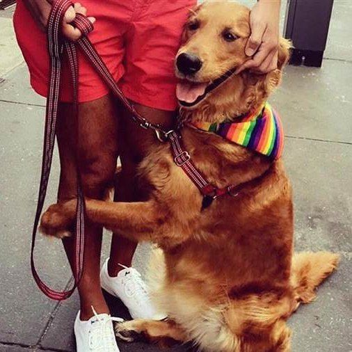 Watchdog Wednesday I @louboutinanyc, a friendly golden retriever gives out hugs in NYC I online safety, digital citizenship