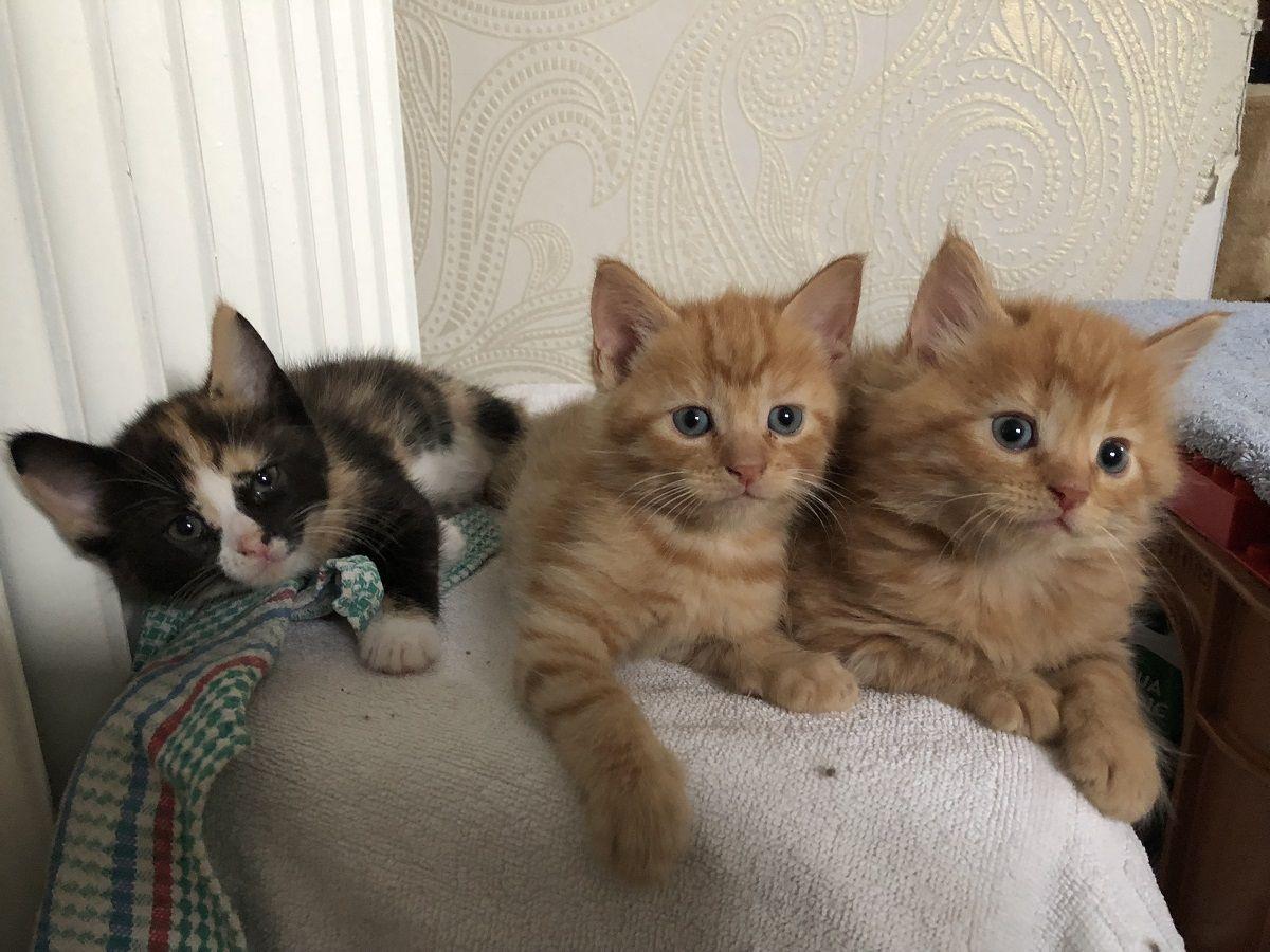 3 Kleine Katzen Crazy Cats Cute Cats Animals