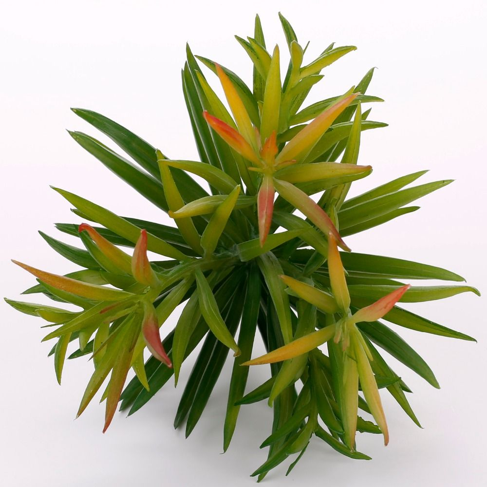 Artificial Dianthus Green Plants Artificial Succulents Fake Plastic