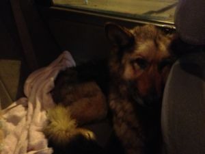 Ad Id 502124394 Found Dog Airdrie Country View Larger Image Date