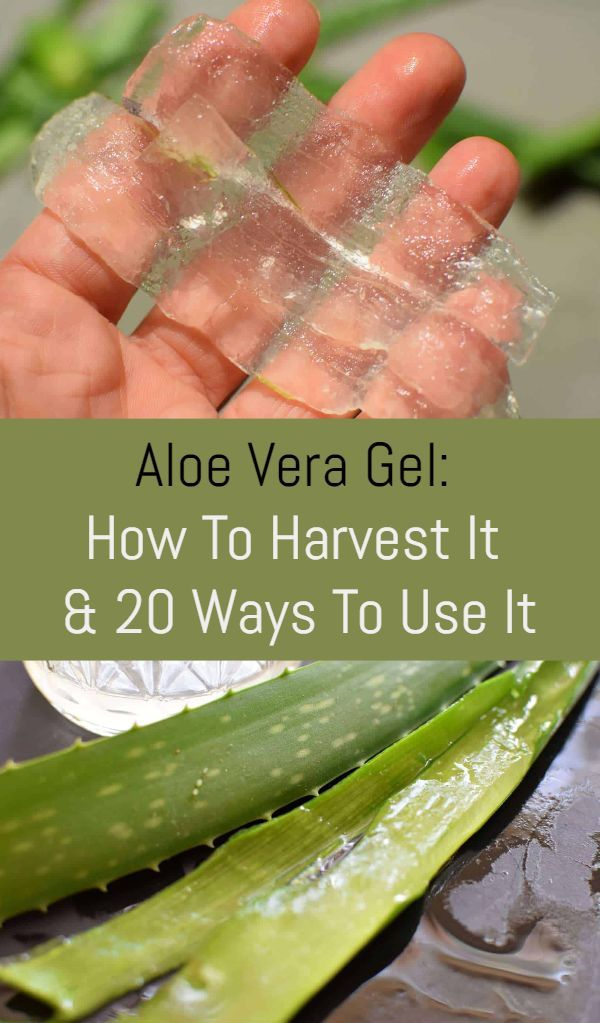 Aloe Vera Gel How To Harvest It And 20 Ways To Use It Diy Aloe