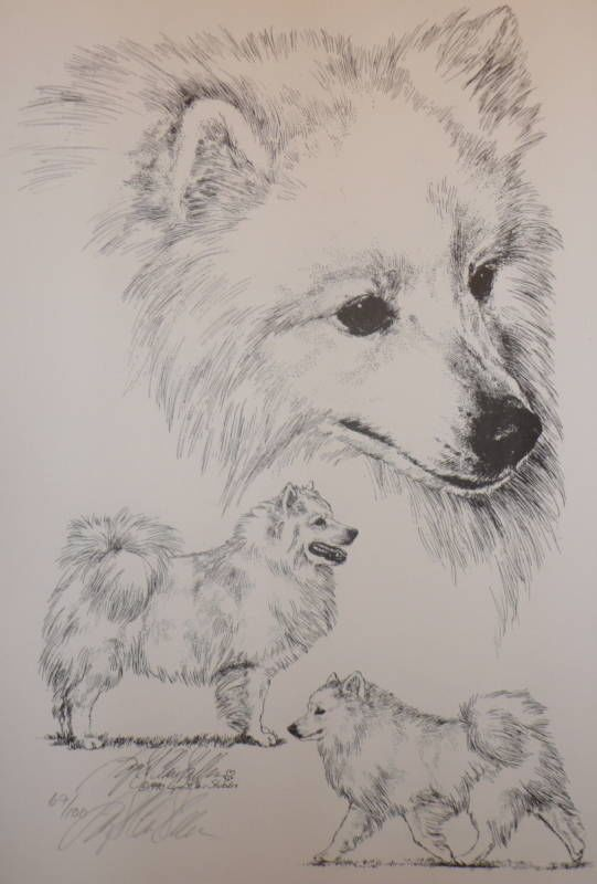 Pin On American Eskimo Tattoos Ideas