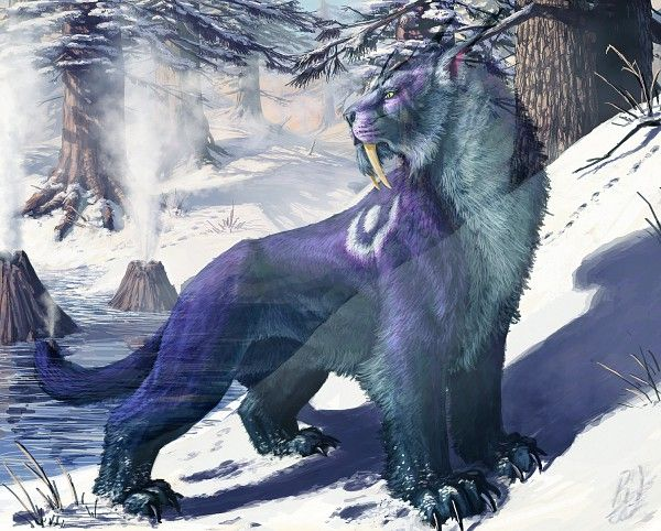 Night Elf Druid/Cat Form | Fantasy Art | Pinterest | Night elf and ...