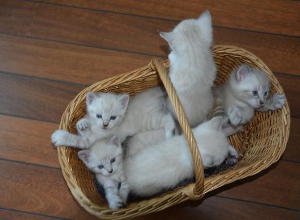 Cara Merawat Kucing Anggora Kecil Animals Pets Cute Cats
