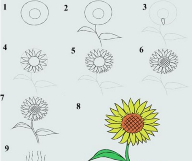 Gambar Bunga Matahari Mozaik Cara Mudah Belajar Menggambar Beserta Langkah Langkahnya Ragam 24 Gambar Sketsa Bunga Pensil Mudah Di Mosaik Bunga Gambar Bunga