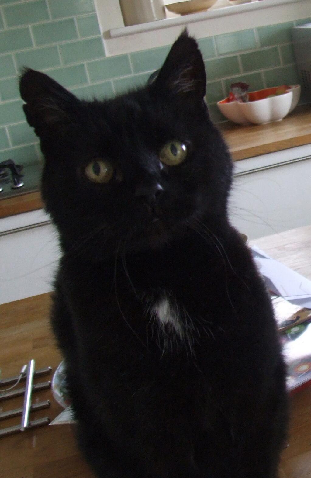 Pin on Black Catslike Buckwheat!