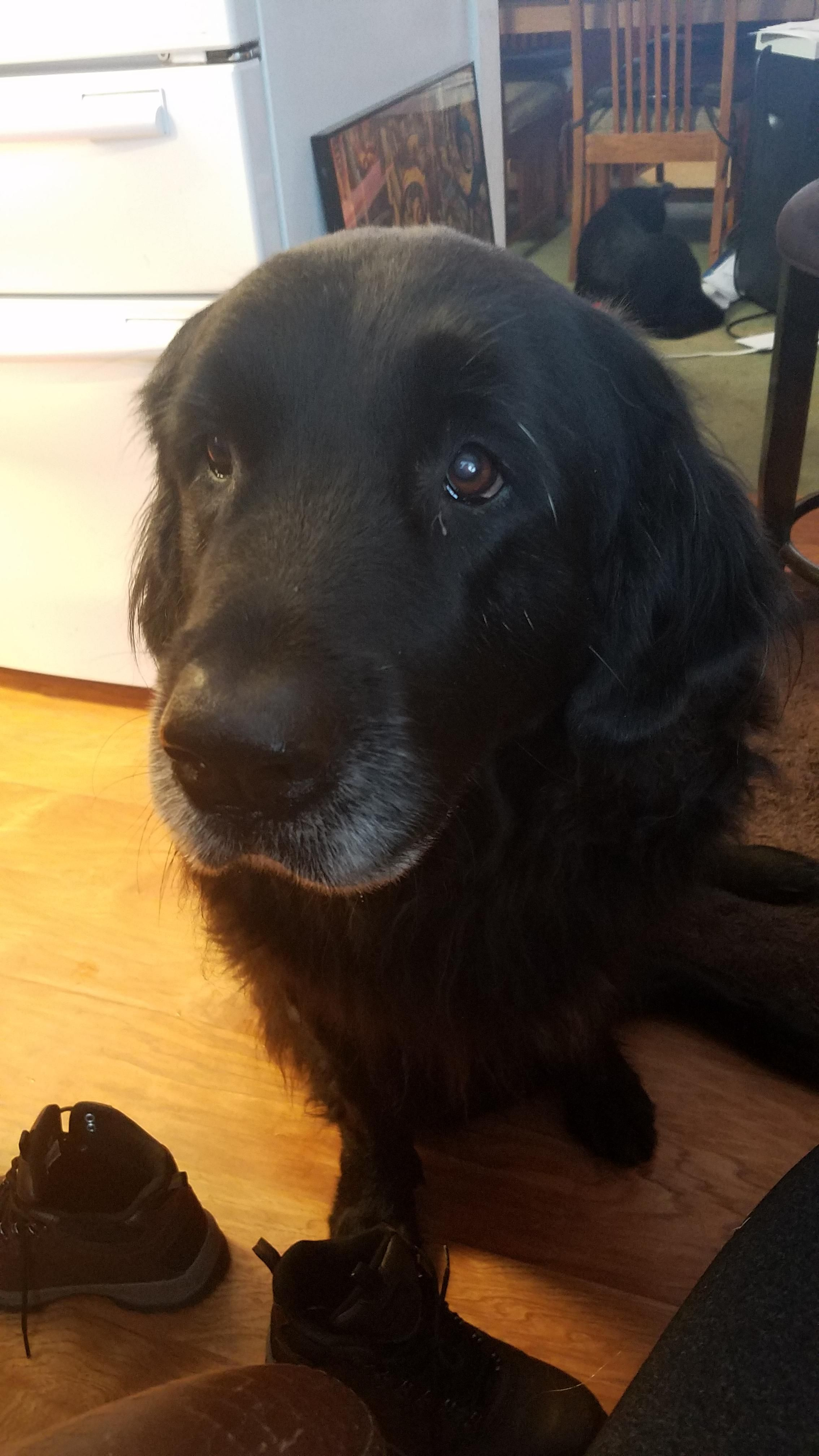 She S 9 Years Old And Still A Pro At Puppy Dog Eyes Http Ift Tt