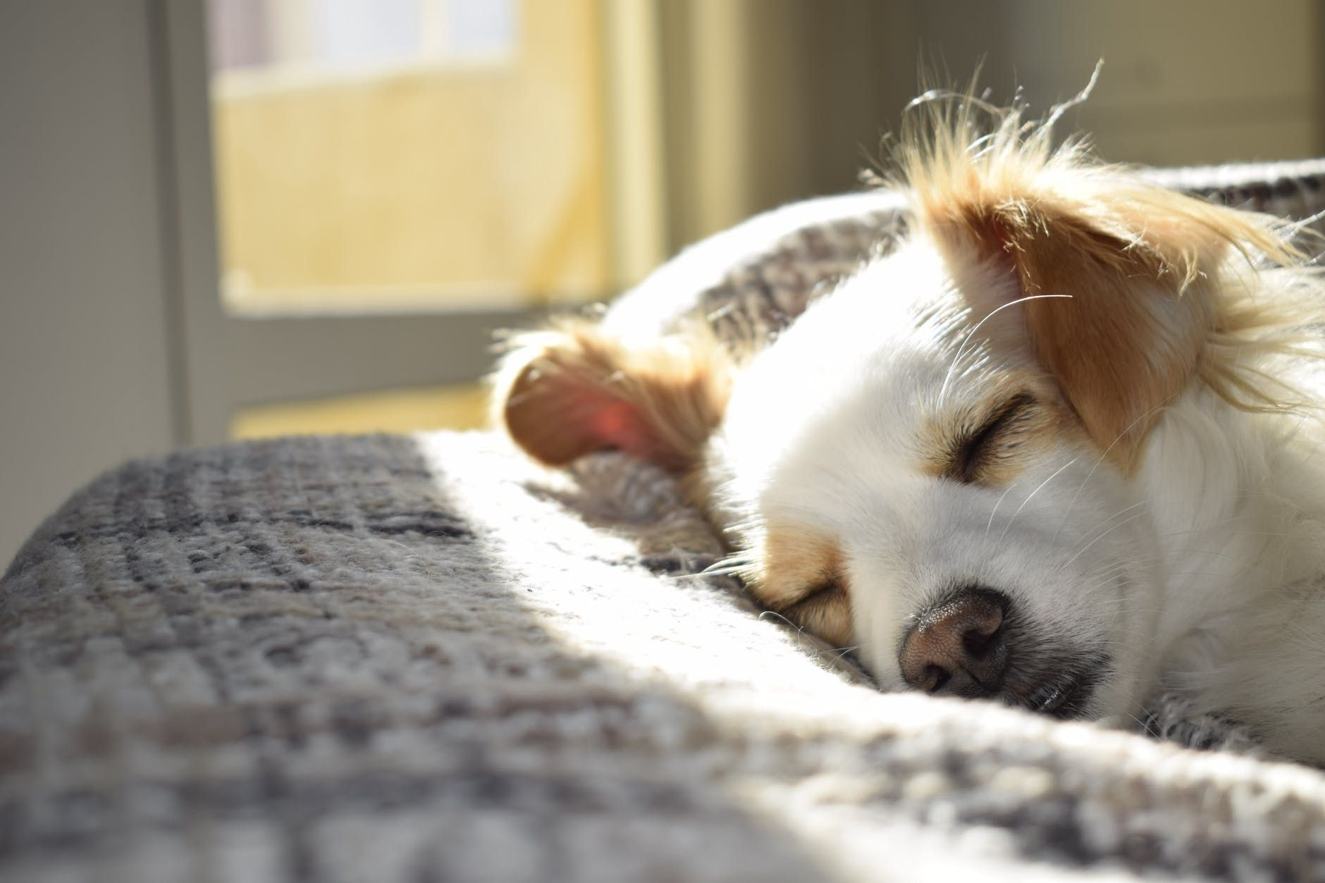 Ways to care for your pet without breaking the bank Lazy