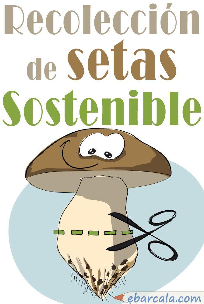 Recolección de #setas #sostenible. Cortar por la línea de puntos hace que el #micelio se conserve para que brote el #hongo durante años, tan feliz!
