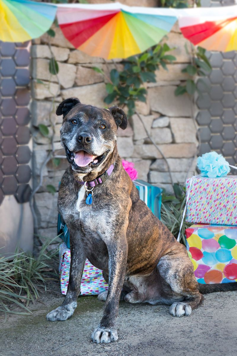 RSPCA NSW Celebrates its 146th Birthday! Australian Dog