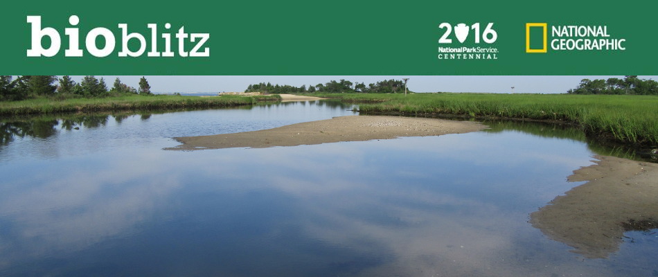 This BioBlitz is part of a larger effort coordinated by the National Park…