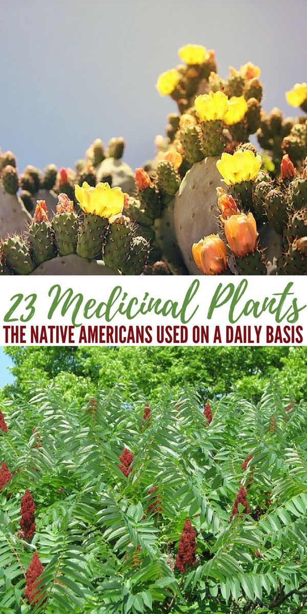 23 Medicinal Plants the Native Americans Used on a Daily Basis  Medicinal plants
