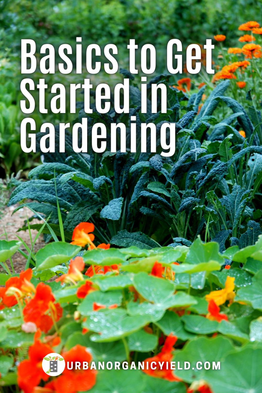 ebe8688f24a2ae1c5e9835ec36370c3e - Expert Gardener Plant Food How To Use