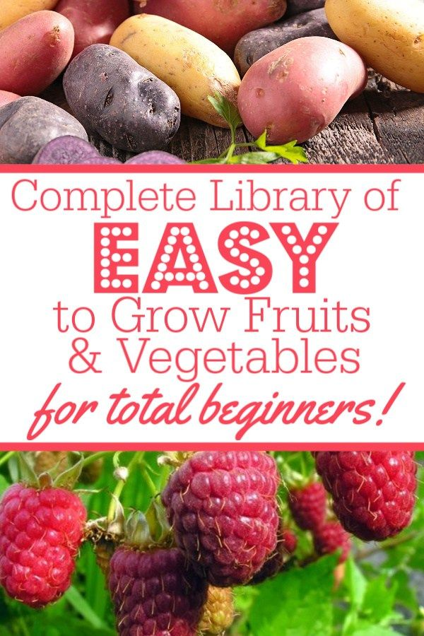 13 Easy To Grow Fruits & Vegetables for Absolute Beginning Gardeners - A Country Girl's Life #howtogrowvegetables