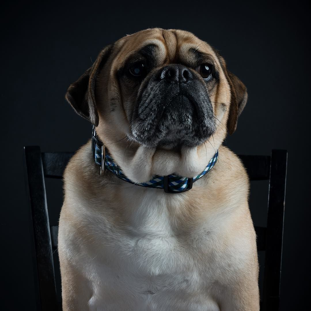 """""""This handsome dude is named Cash. He sat like a Diva for portraits."""" writes @tjcarswell  #dogsofinstagram #dog by: @dogsofinstagram"""