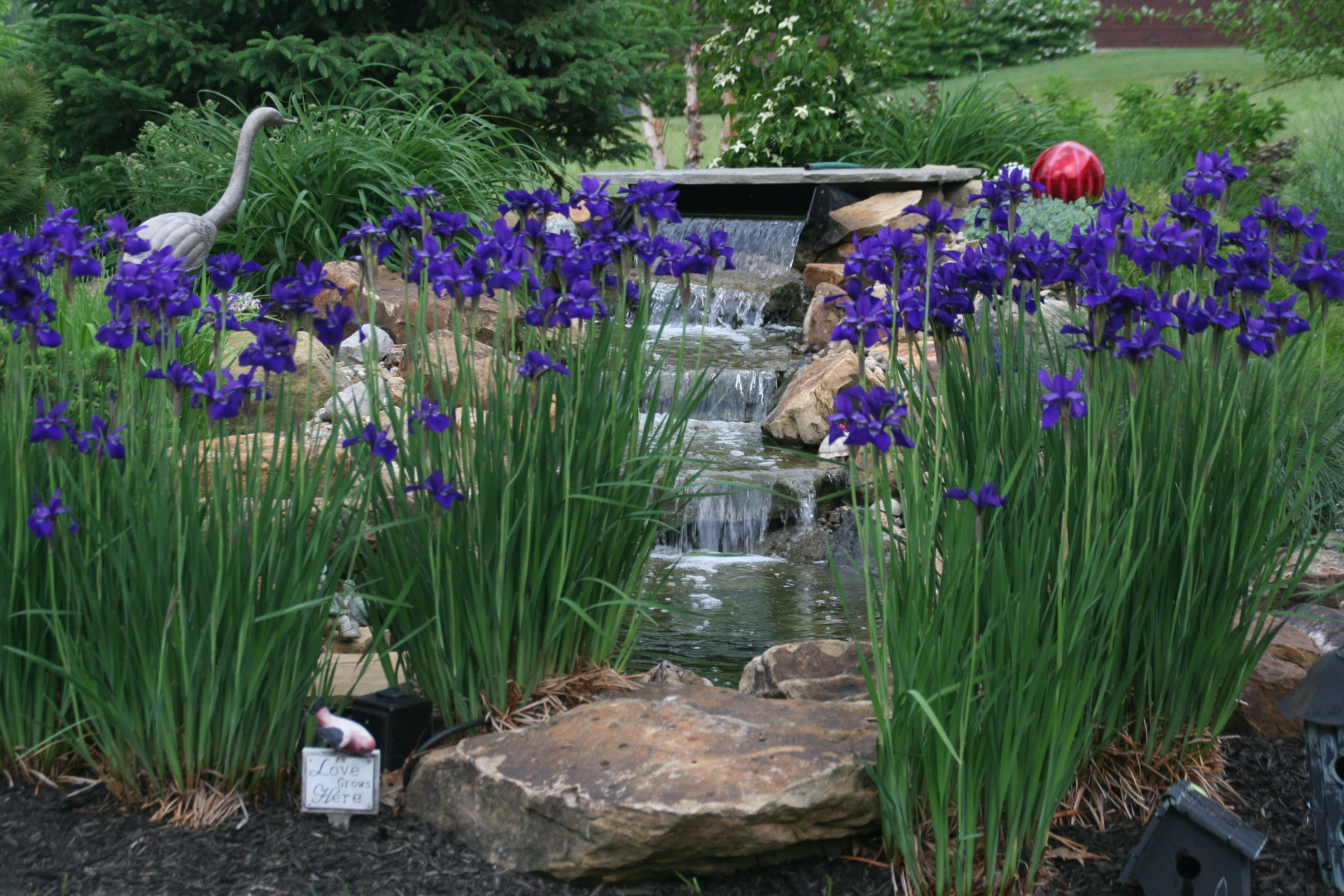 Garden water features  water feature surrounded by flowers  backyard  Pinterest  Water