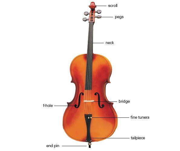 ebe9ae3c7f09c552cdc355e28d015e86 Violin Schematics on violin components, violin symbol, violin neck measurements, violin illustration, violin drawing,
