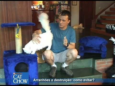 Dicas Cat Chow de como evitar que seu gato arranhe e destrua seus móveis