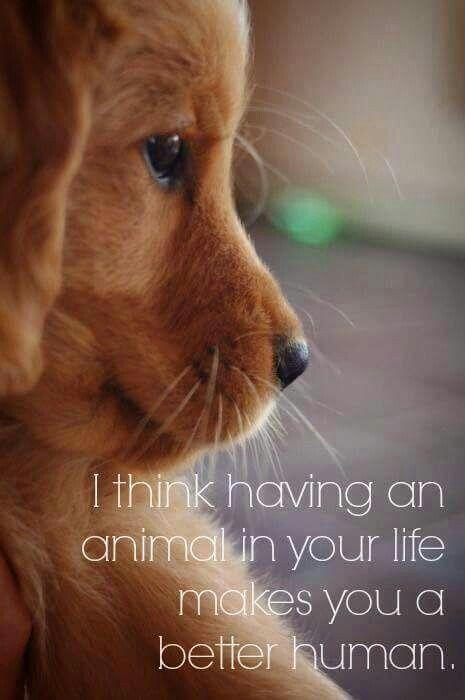 So true | dog kennels | Amor perruno, Perro amigo, Perros lindos
