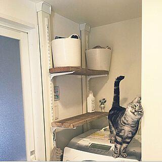Photo of バターミルクペイント/イベント用/洗濯機まわりの収納/猫との生活/猫部…などのインテリア実例 – 2019-10-18 13:12:05 | RoomClip(ルームクリップ)
