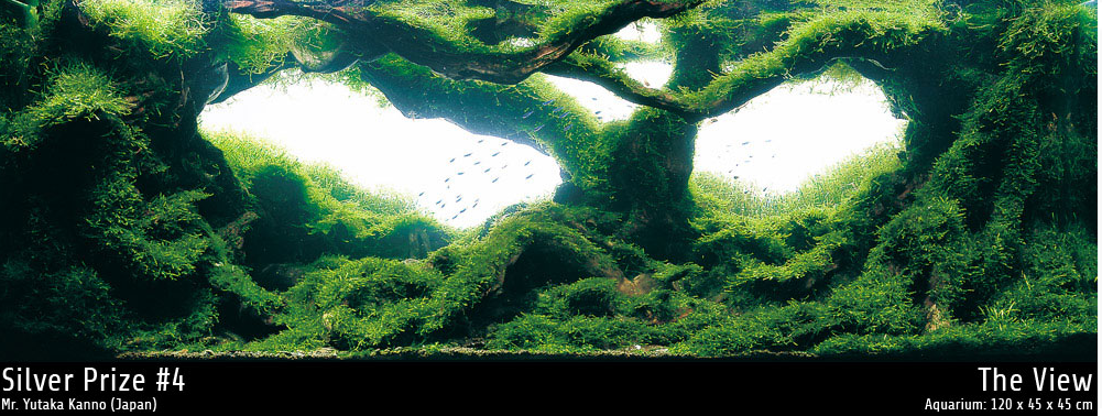 quot overgrown jungle quot look with java moss aquascaping world