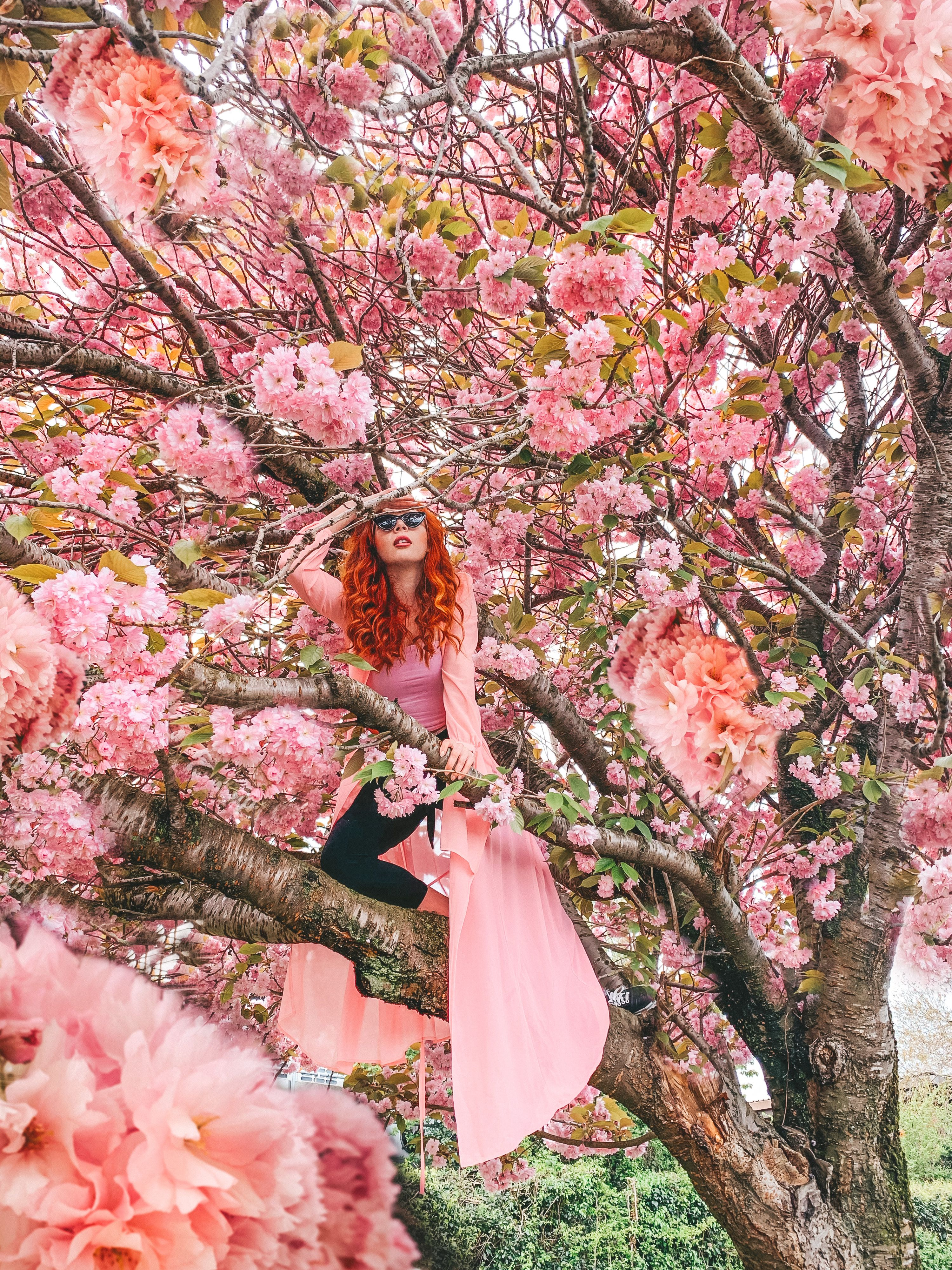 Picture On Cherry Blossom Tree Photo Shoot Photography Creative Posing By Foxywanderer Instagram Photography Instagram Photo