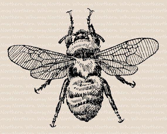 Bumblebee Clip Art - Vintage Bee Illustration - Antique ...