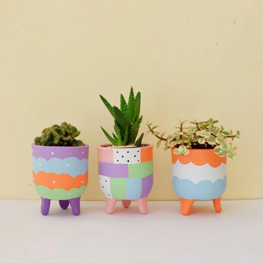 Colorful Plants Plant Family Plant Gang Pastel Plants Cactus