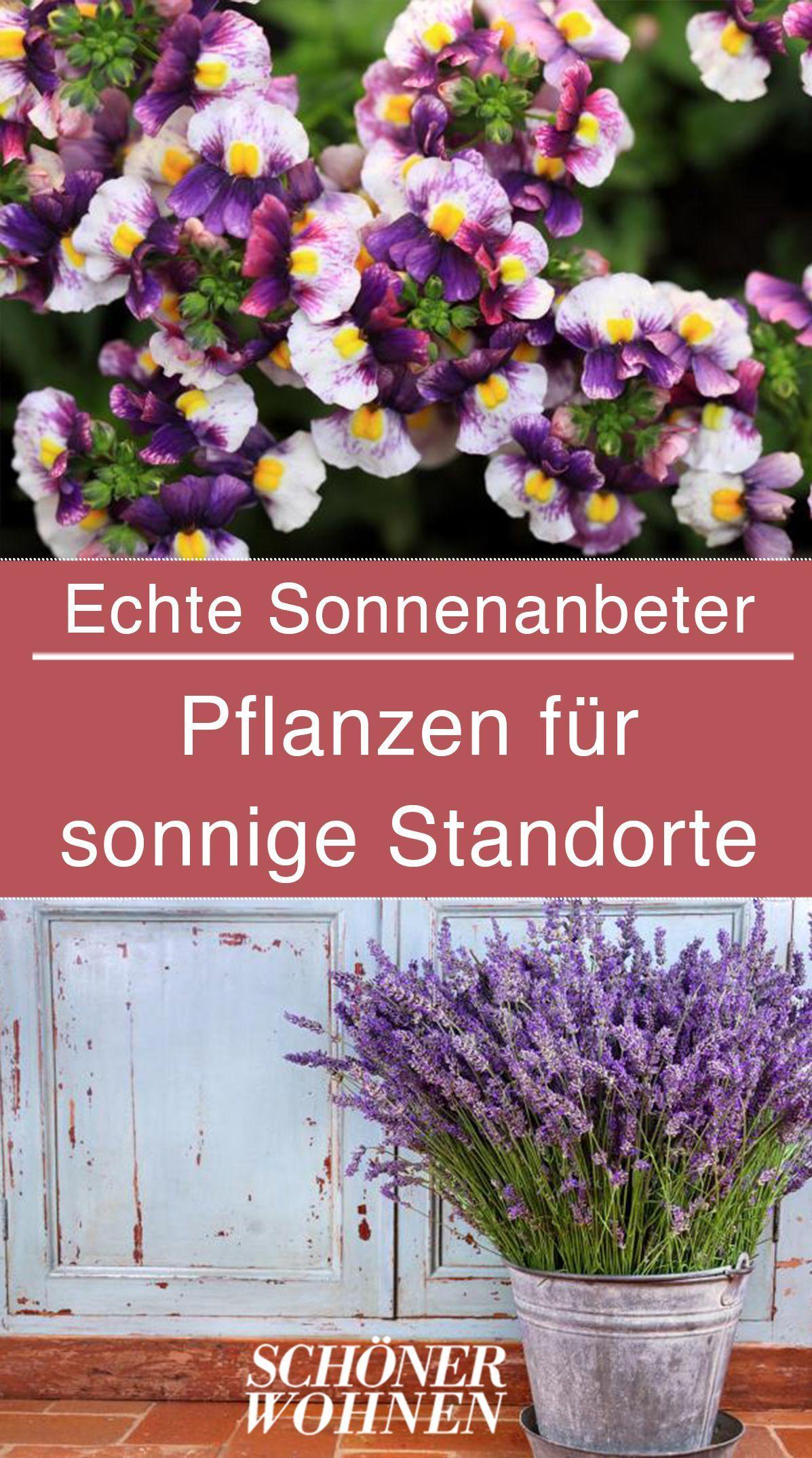 Die besten Pflanzen für Südbalkone  eine Übersicht Bei ausreichender Wasserversorgung sorgen diese Pflanzen für ein Blütenfeuerwerk in der Sonne