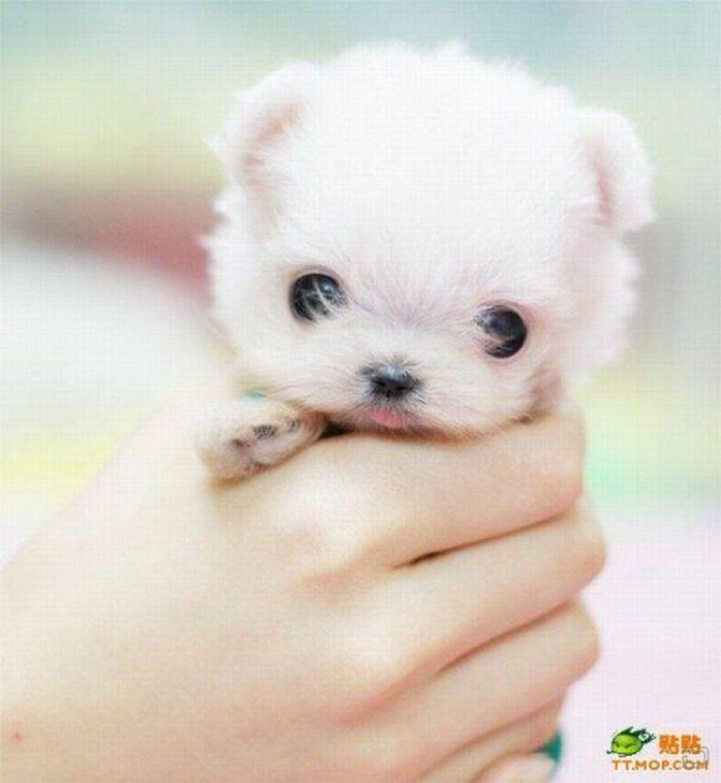 Cute Little Dogs The Source Cuteness Roaie